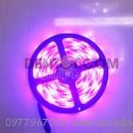 led-magic-(11)