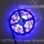 Led magic 5050 cuộn 5m – IP44