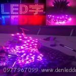 LED màu hồng F5